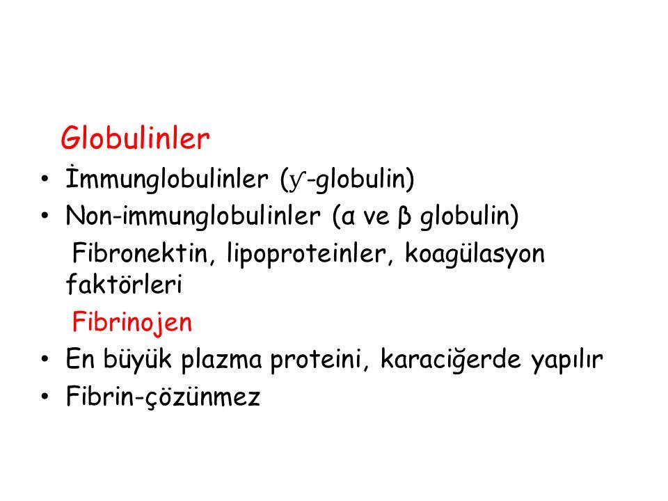 Globulinler İmmunglobulinler ( ƴ -globulin) Non-immunglobulinler (α ve β globulin) Fibronektin, lipoproteinler, koagülasyon faktörleri Fibrinojen En b