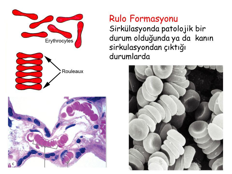 Rulo Formasyonu Sirkülasyonda patolojik bir durum olduğunda ya da kanın sirkulasyondan çıktığı durumlarda