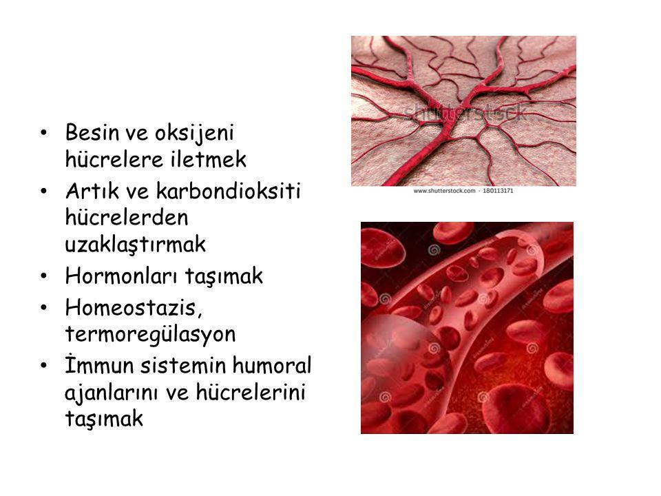 Besin ve oksijeni hücrelere iletmek Artık ve karbondioksiti hücrelerden uzaklaştırmak Hormonları taşımak Homeostazis, termoregülasyon İmmun sistemin h