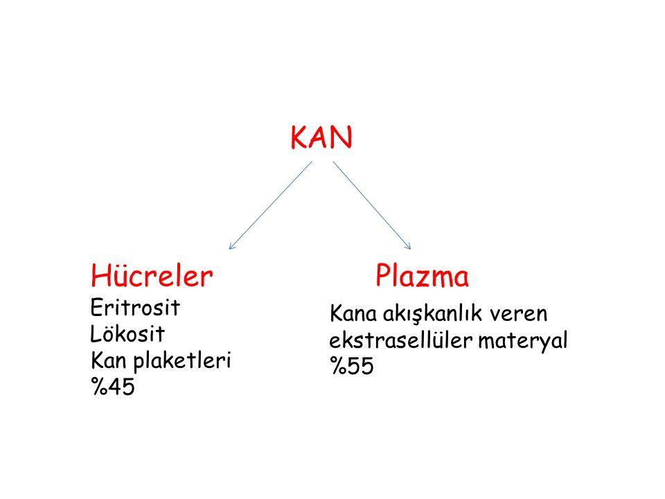 KAN Hücreler Eritrosit Lökosit Kan plaketleri %45 Plazma Kana akışkanlık veren ekstrasellüler materyal %55