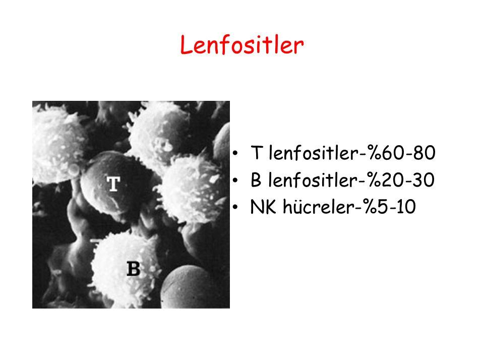 Lenfositler T lenfositler-%60-80 B lenfositler-%20-30 NK hücreler-%5-10