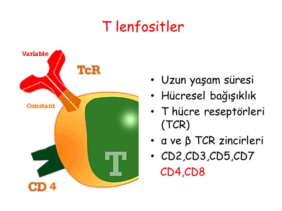 T lenfositler Uzun yaşam süresi Hücresel bağışıklık T hücre reseptörleri (TCR) α ve β TCR zincirleri CD2,CD3,CD5,CD7 CD4,CD8