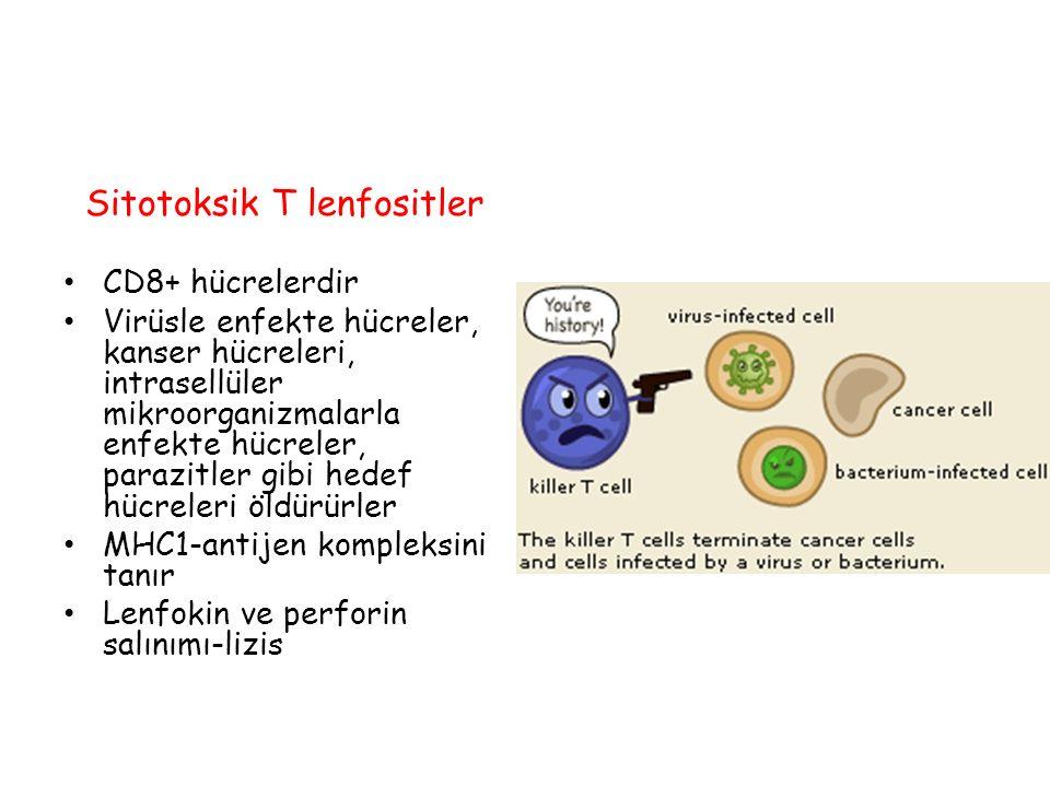 Sitotoksik T lenfositler CD8+ hücrelerdir Virüsle enfekte hücreler, kanser hücreleri, intrasellüler mikroorganizmalarla enfekte hücreler, parazitler g
