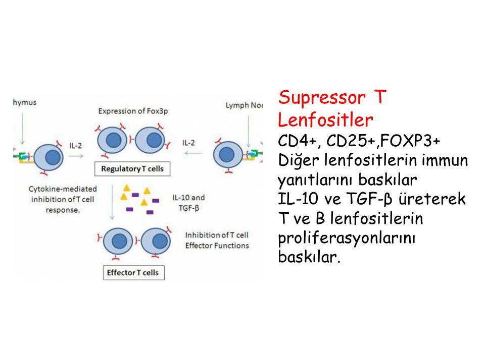Supressor T Lenfositler CD4+, CD25+,FOXP3+ Diğer lenfositlerin immun yanıtlarını baskılar IL-10 ve TGF-β üreterek T ve B lenfositlerin proliferasyonla