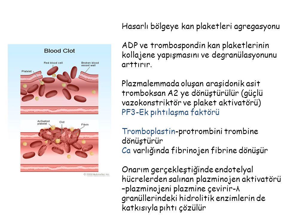 Hasarlı bölgeye kan plaketleri agregasyonu ADP ve trombospondin kan plaketlerinin kollajene yapışmasını ve degranülasyonunu arttırır. Plazmalemmada ol
