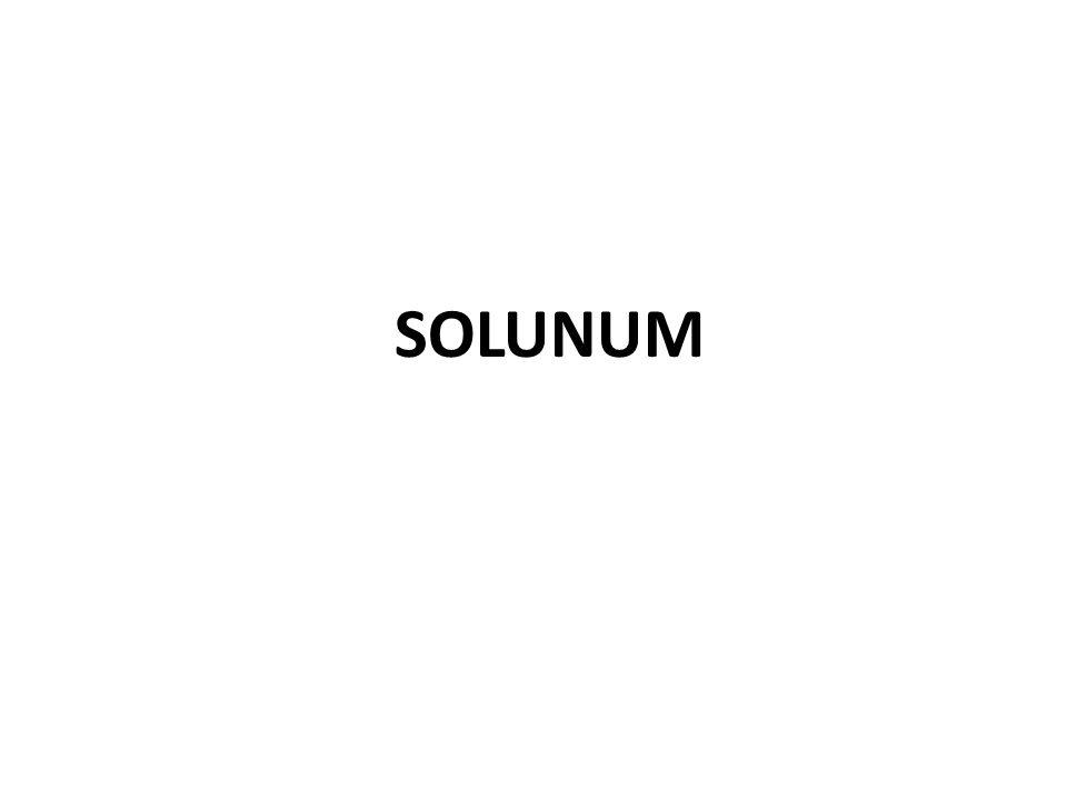 SOLUNUM