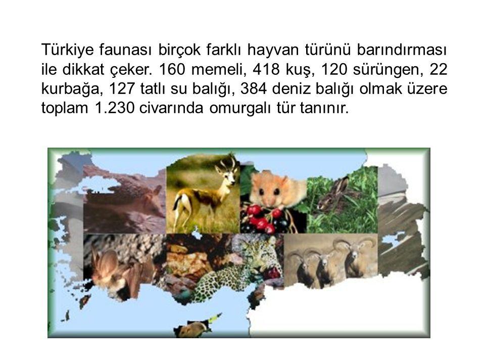 Türkiye faunası birçok farklı hayvan türünü barındırması ile dikkat çeker. 160 memeli, 418 kuş, 120 sürüngen, 22 kurbağa, 127 tatlı su balığı, 384 den