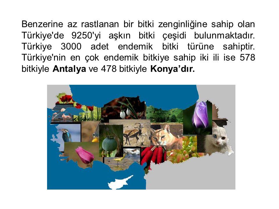 Benzerine az rastlanan bir bitki zenginliğine sahip olan Türkiye'de 9250'yi aşkın bitki çeşidi bulunmaktadır. Türkiye 3000 adet endemik bitki türüne s