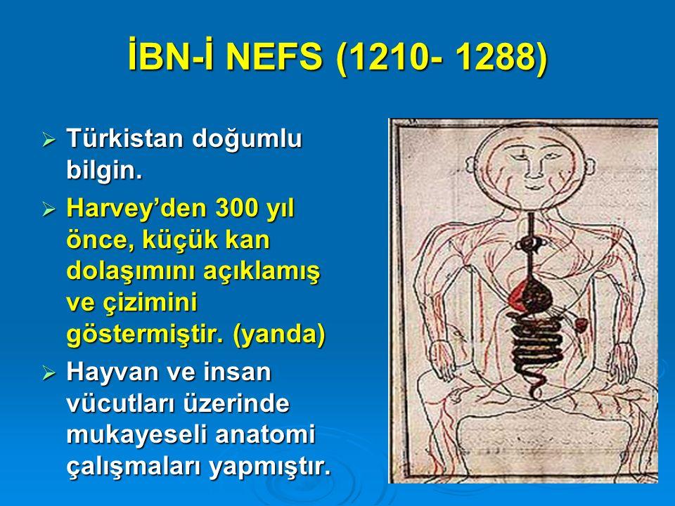 İBN-İ NEFS (1210- 1288)  Türkistan doğumlu bilgin.  Harvey'den 300 yıl önce, küçük kan dolaşımını açıklamış ve çizimini göstermiştir. (yanda)  Hayv