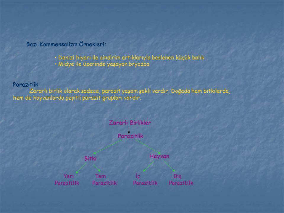 Bazı Kommensalizm Örnekleri; Denizi hıyarı ile sindirim artıklarıyla beslenen küçük balık Midye ile üzerinde yaşayan bryozoa Parazitlik Zararlı birlik