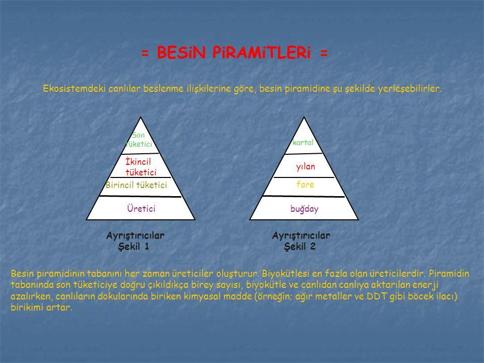 Ekosistemdeki canlılar beslenme ilişkilerine göre, besin piramidine şu şekilde yerleşebilirler. Son tüketici İkincil tüketici Birincil tüketici Üretic