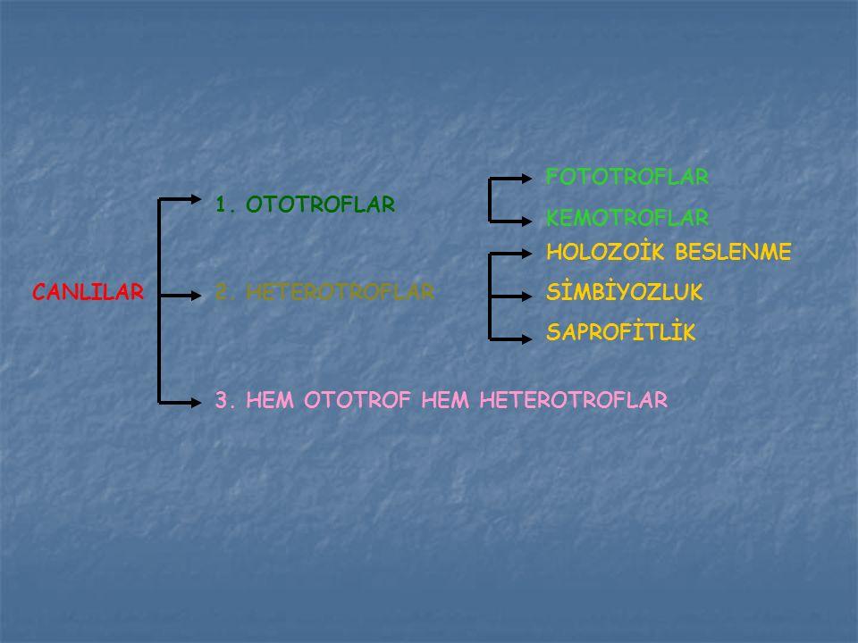 CANLILAR 1. OTOTROFLAR 2. HETEROTROFLAR 3. HEM OTOTROF HEM HETEROTROFLAR FOTOTROFLAR KEMOTROFLAR HOLOZOİK BESLENME SİMBİYOZLUK SAPROFİTLİK