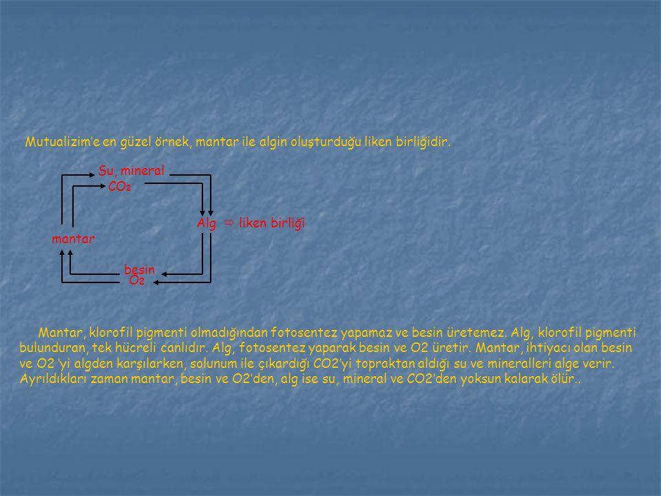 Mutualizim'e en güzel örnek, mantar ile algin oluşturduğu liken birliğidir. Su, mineral CO 2 Alg  liken birliği mantar besin O2O2 Mantar, klorofil pi