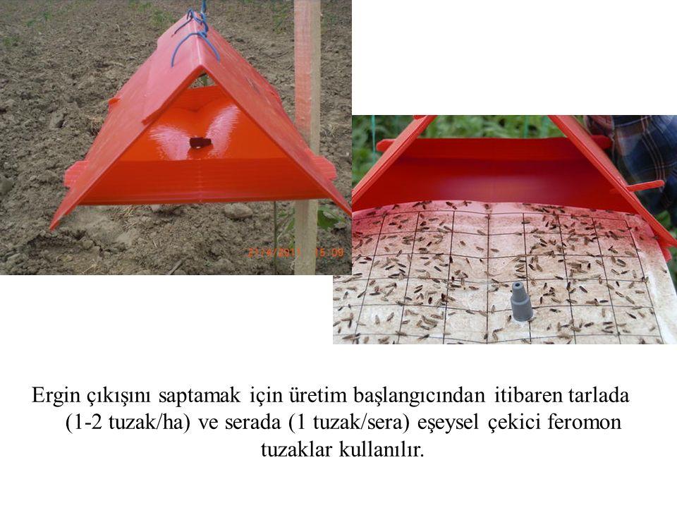 Ergin çıkışını saptamak için üretim başlangıcından itibaren tarlada (1-2 tuzak/ha) ve serada (1 tuzak/sera) eşeysel çekici feromon tuzaklar kullanılır.