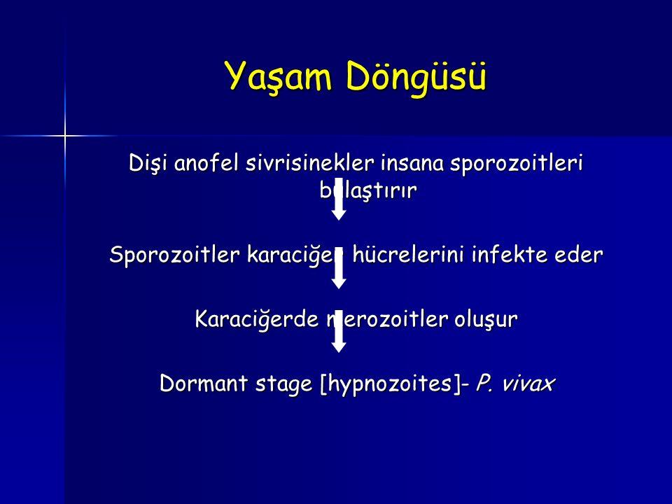 Yaşam Döngüsü Dişi anofel sivrisinekler insana sporozoitleri bulaştırır Sporozoitler karaciğer hücrelerini infekte eder Karaciğerde merozoitler oluşur