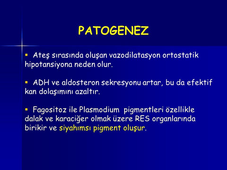  Ateş sırasında oluşan vazodilatasyon ortostatik hipotansiyona neden olur.  ADH ve aldosteron sekresyonu artar, bu da efektif kan dolaşımını azaltır