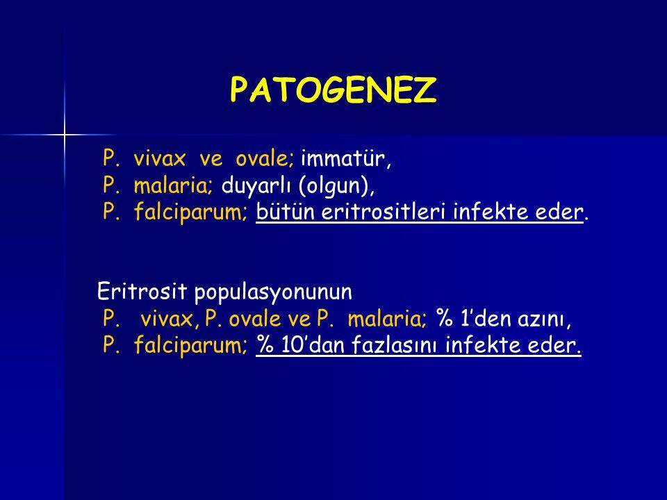 P. vivax ve ovale; immatür, P. malaria; duyarlı (olgun), P. falciparum; bütün eritrositleri infekte eder. Eritrosit populasyonunun P. vivax, P. ovale
