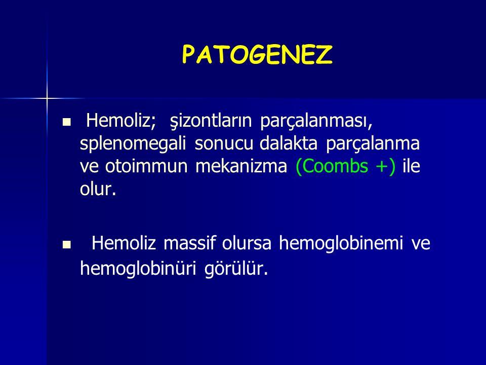 Hemoliz; şizontların parçalanması, splenomegali sonucu dalakta parçalanma ve otoimmun mekanizma (Coombs +) ile olur. Hemoliz massif olursa hemoglobine