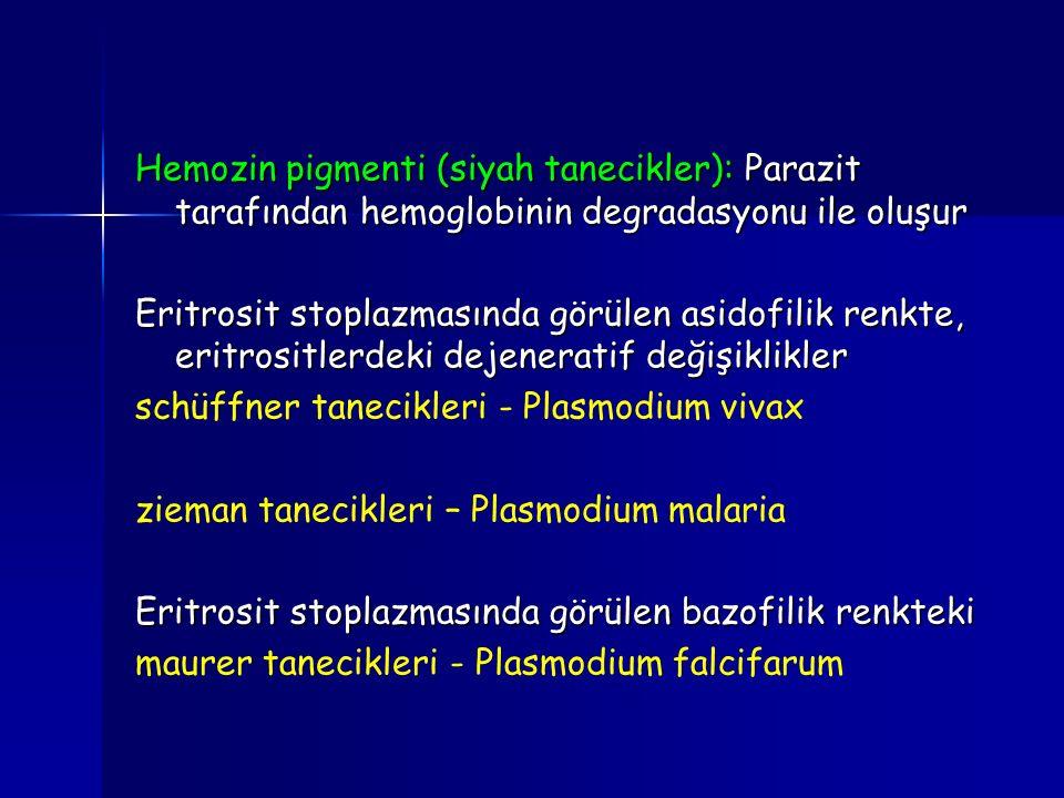 Hemozin pigmenti (siyah tanecikler): Parazit tarafından hemoglobinin degradasyonu ile oluşur Eritrosit stoplazmasında görülen asidofilik renkte, eritr