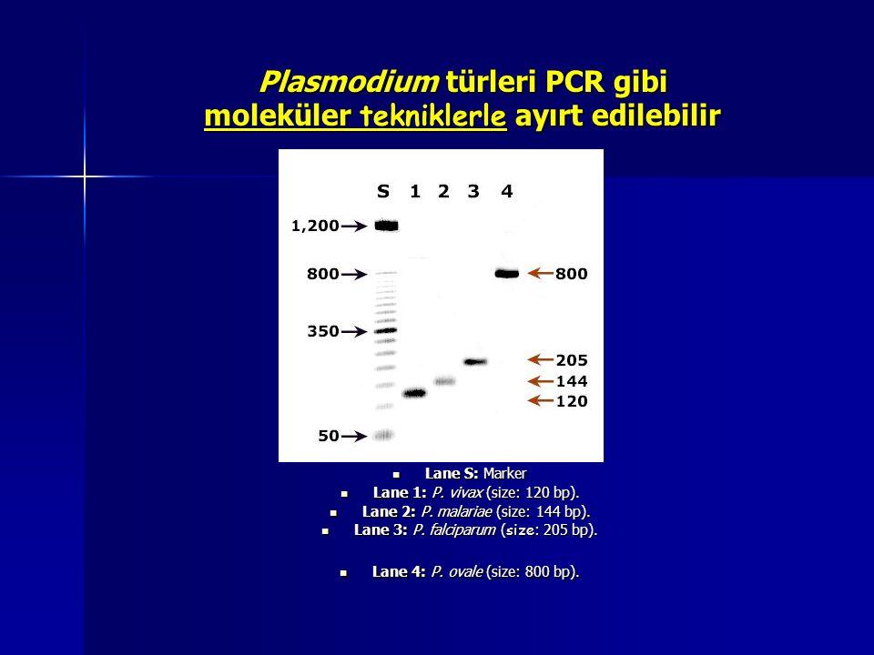 Plasmodium türleri PCR gibi moleküler tekniklerle ayırt edilebilir Lane S: Marker Lane S: Marker Lane 1: P. vivax (size: 120 bp). Lane 1: P. vivax (si