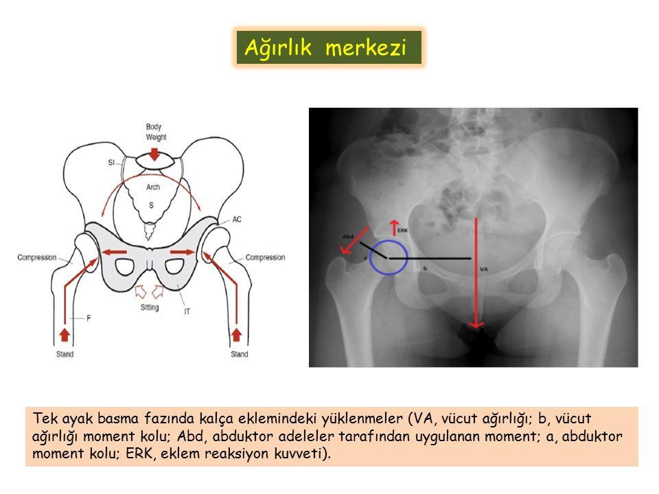 Ağırlık merkezi Tek ayak basma fazında kalça eklemindeki yüklenmeler (VA, vücut ağırlığı; b, vücut ağırlığı moment kolu; Abd, abduktor adeleler tarafı