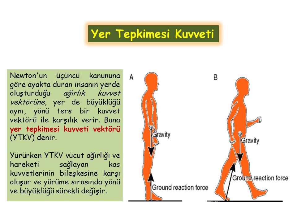 Newton'un üçüncü kanununa göre ayakta duran insanın yerde oluşturduğu ağırlık kuvvet vektörüne, yer de büyüklüğü aynı, yönü ters bir kuvvet vektörü il