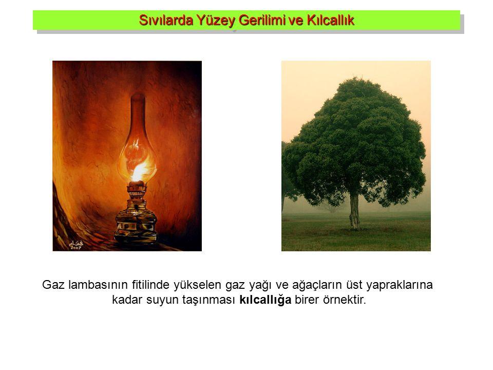 Gaz lambasının fitilinde yükselen gaz yağı ve ağaçların üst yapraklarına kadar suyun taşınması kılcallığa birer örnektir. Sıvılarda Yüzey Gerilimi ve