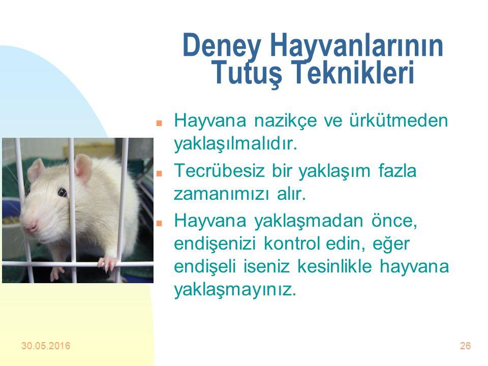 Deney Hayvanlarının Tutuş Teknikleri n Deney hayvanları mutlaka tecrübeli kişiler tarafından tekniğine uygun bir şekilde tutulmalıdır. n Deney hayvanl