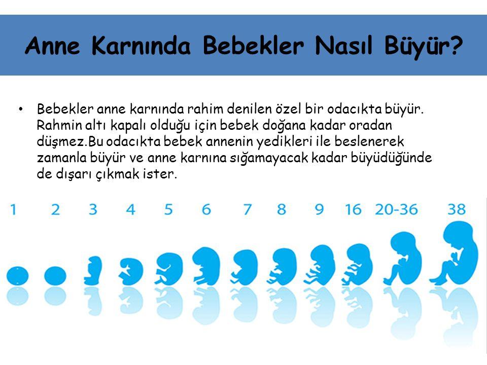 Anne Karnında Bebekler Nasıl Büyür? Bebekler anne karnında rahim denilen özel bir odacıkta büyür. Rahmin altı kapalı olduğu için bebek doğana kadar or