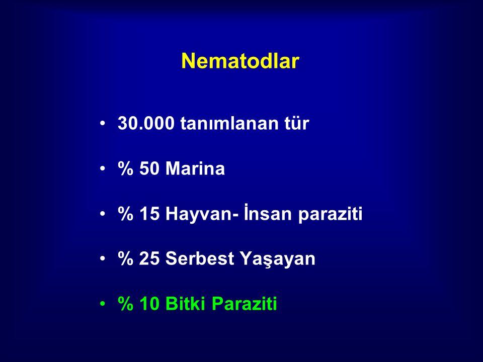 Nematodlar 30.000 tanımlanan tür % 50 Marina % 15 Hayvan- İnsan paraziti % 25 Serbest Yaşayan % 10 Bitki Paraziti
