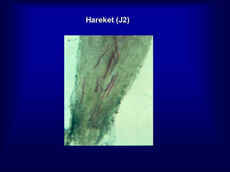 23 Hareket (J2)