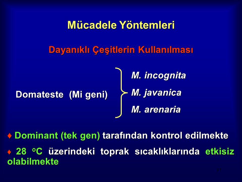 37 Mücadele Yöntemleri Dayanıklı Çeşitlerin Kullanılması Domateste (Mi geni) M. incognita M. javanica M. arenaria ♦ Dominant (tek gen) tarafından kont