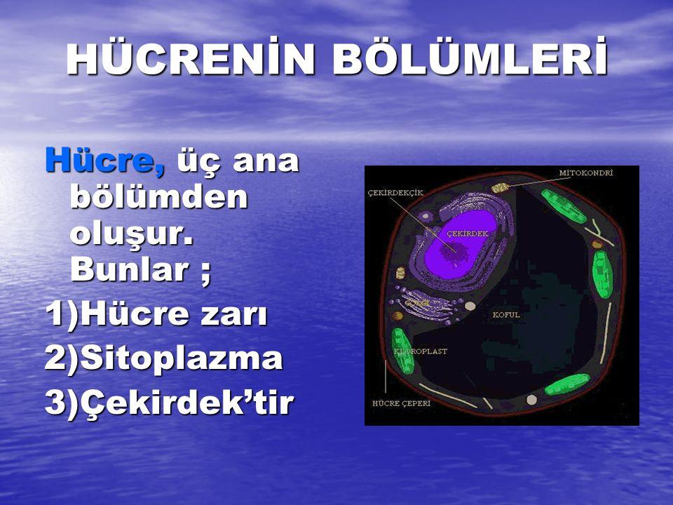 HÜCRENİN BÖLÜMLERİ Hücre, üç ana bölümden oluşur. Bunlar ; 1)Hücre zarı 2)Sitoplazma3)Çekirdek'tir