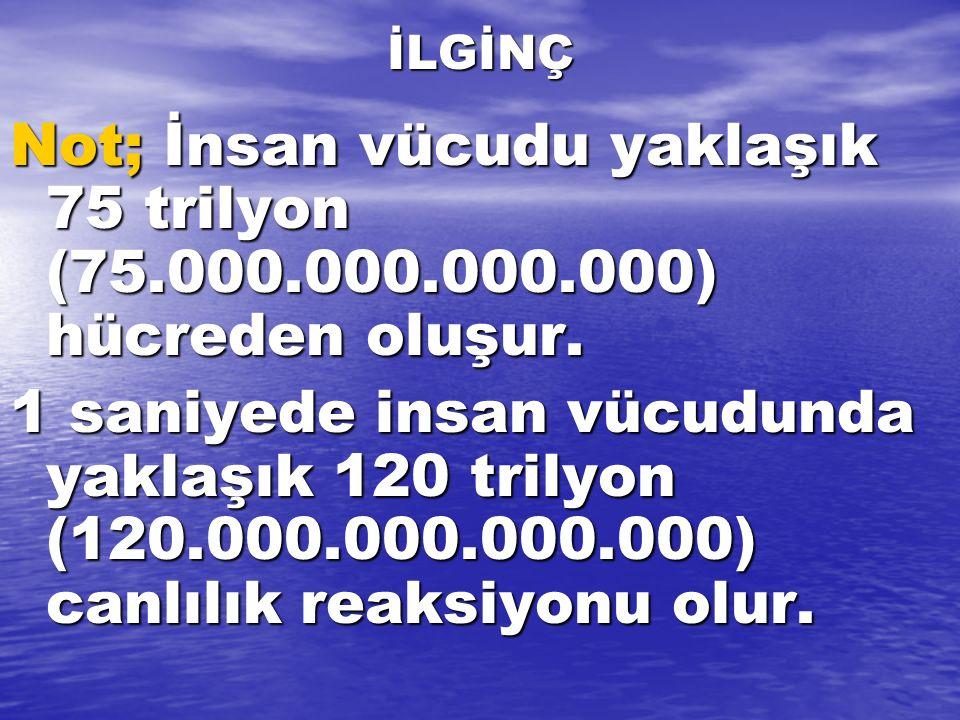 İLGİNÇ Not; İnsan vücudu yaklaşık 75 trilyon (75.000.000.000.000) hücreden oluşur. 1 saniyede insan vücudunda yaklaşık 120 trilyon (120.000.000.000.00
