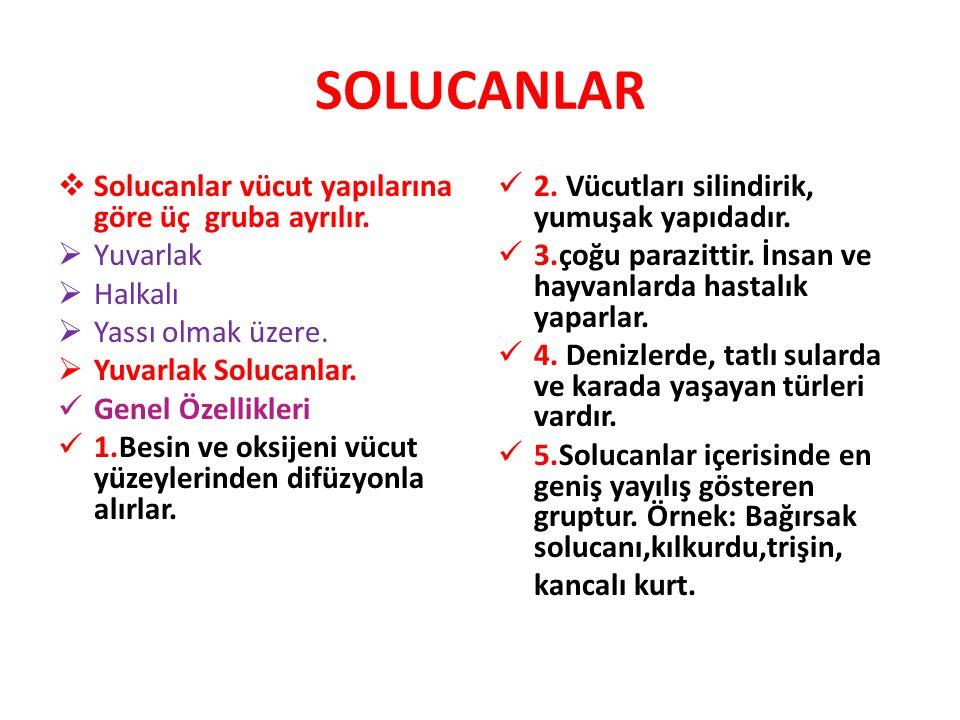 SOLUCANLAR  Solucanlar vücut yapılarına göre üç gruba ayrılır.