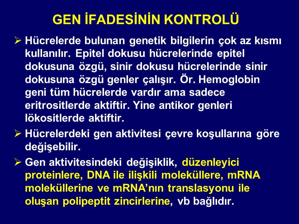 GEN İFADESİNİN KONTROLÜ  Hücrelerde bulunan genetik bilgilerin çok az kısmı kullanılır.