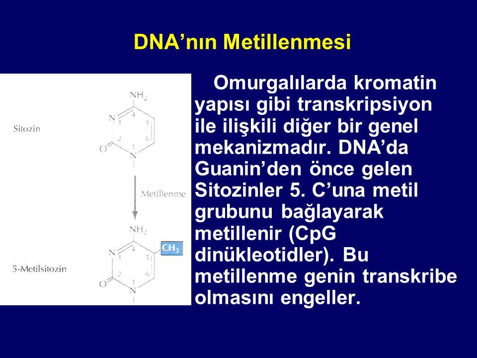 DNA'nın Metillenmesi Omurgalılarda kromatin yapısı gibi transkripsiyon ile ilişkili diğer bir genel mekanizmadır. DNA'da Guanin'den önce gelen Sitozin