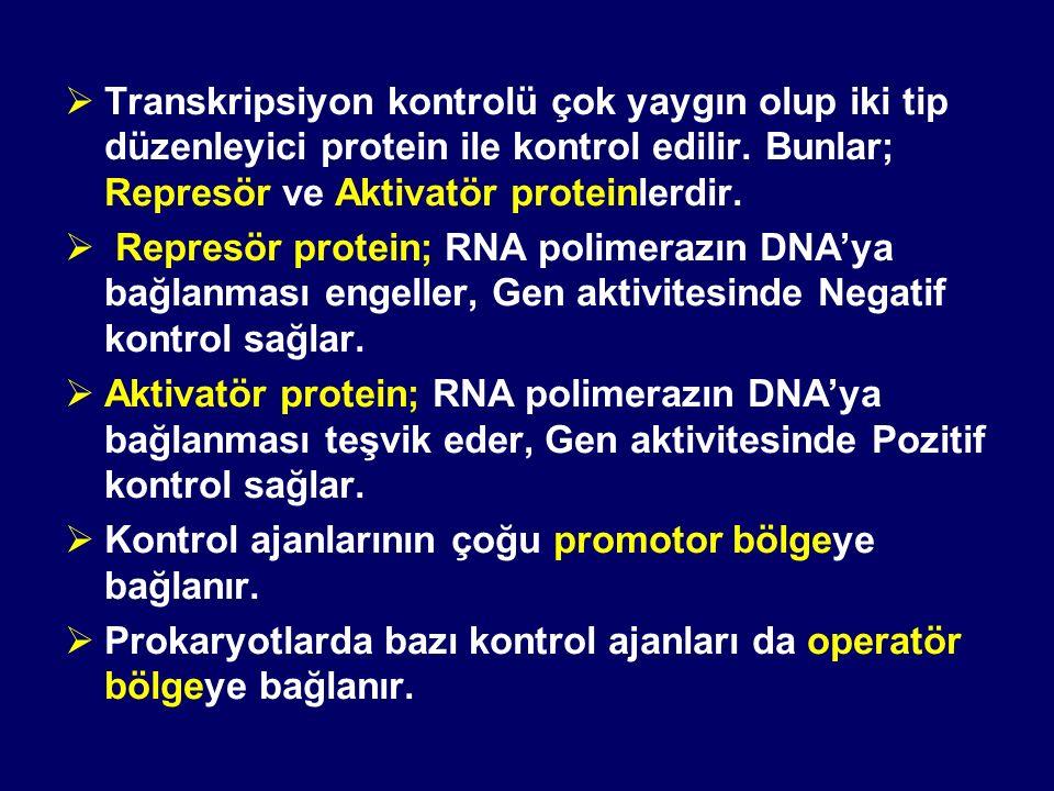  Transkripsiyon kontrolü çok yaygın olup iki tip düzenleyici protein ile kontrol edilir. Bunlar; Represör ve Aktivatör proteinlerdir.  Represör prot