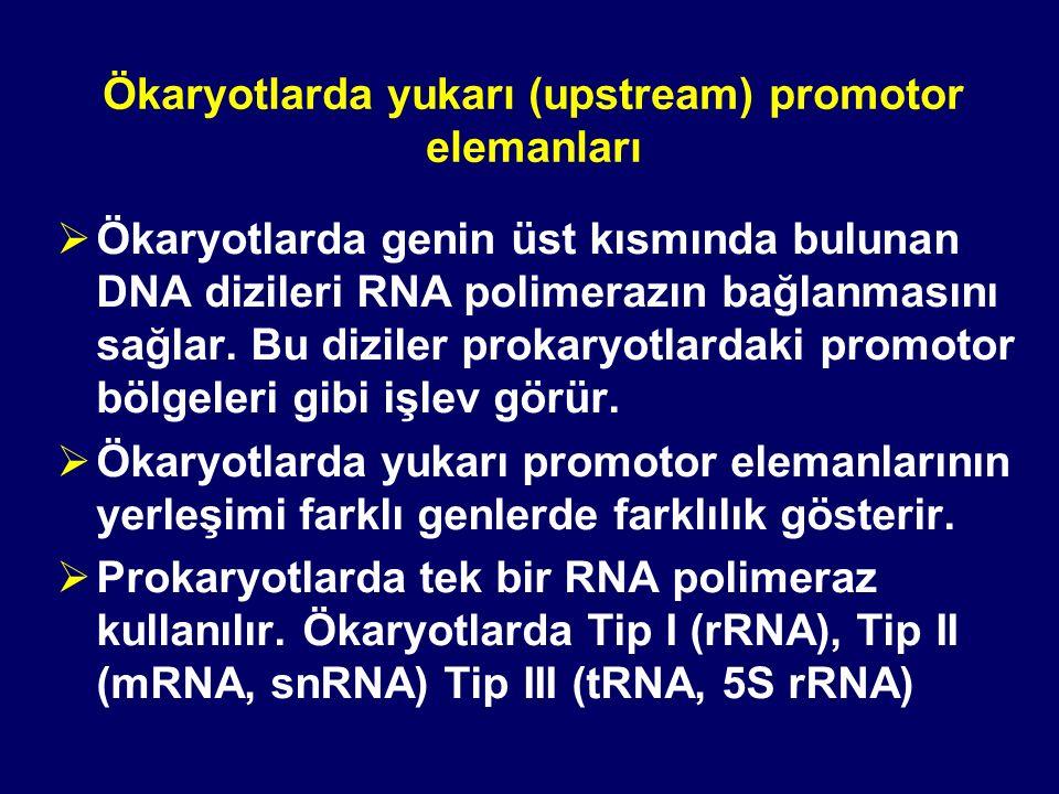 Ökaryotlarda yukarı (upstream) promotor elemanları  Ökaryotlarda genin üst kısmında bulunan DNA dizileri RNA polimerazın bağlanmasını sağlar. Bu dizi