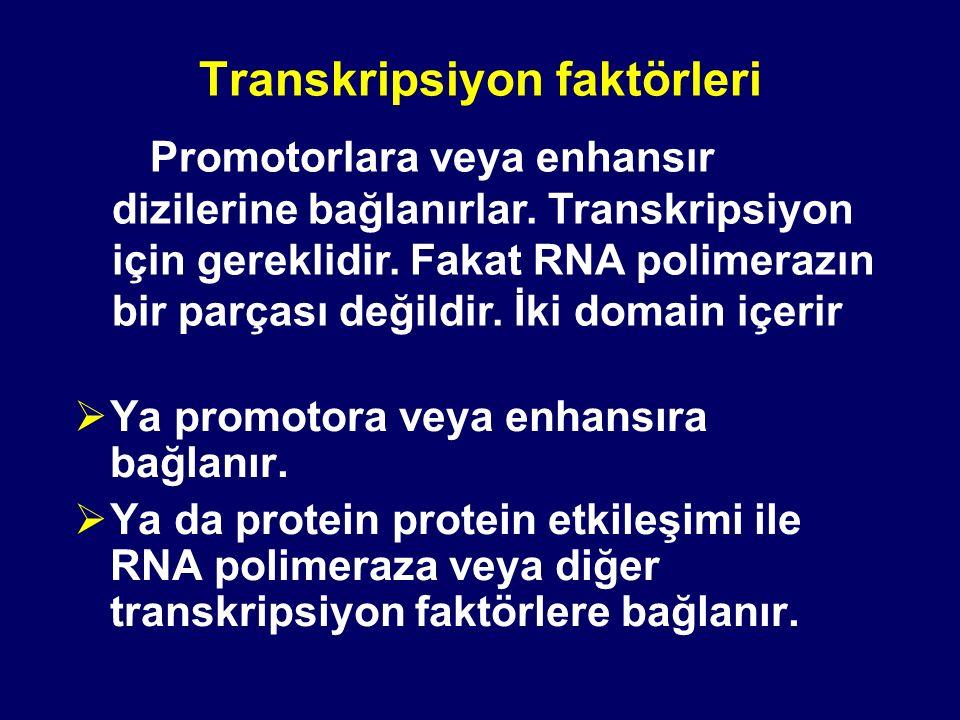 Transkripsiyon faktörleri  Ya promotora veya enhansıra bağlanır.  Ya da protein protein etkileşimi ile RNA polimeraza veya diğer transkripsiyon fakt