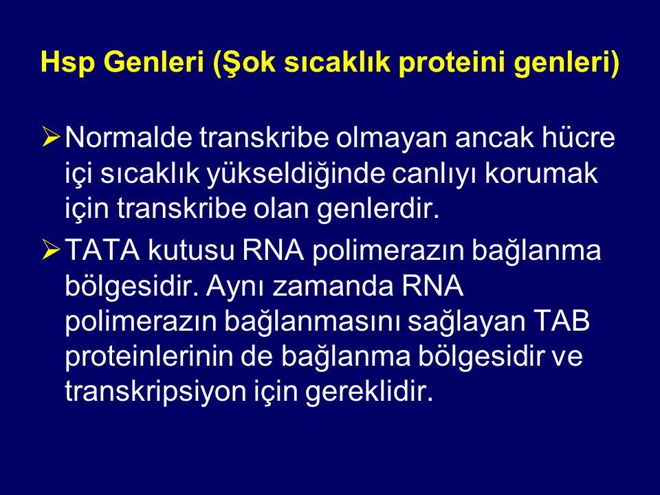 Hsp Genleri (Şok sıcaklık proteini genleri)  Normalde transkribe olmayan ancak hücre içi sıcaklık yükseldiğinde canlıyı korumak için transkribe olan genlerdir.