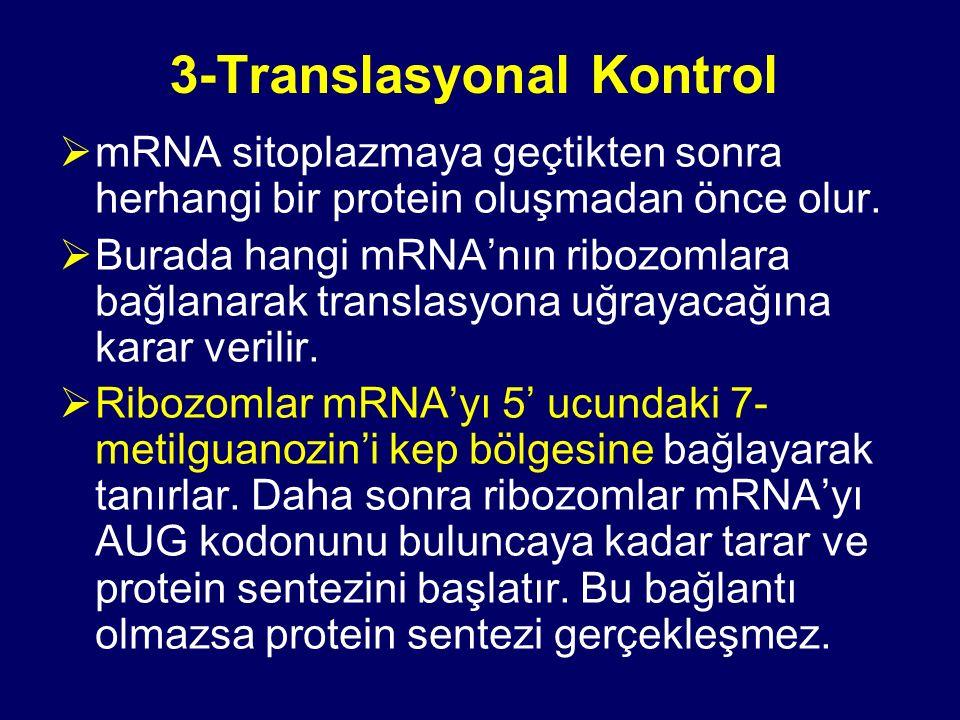 3-Translasyonal Kontrol  mRNA sitoplazmaya geçtikten sonra herhangi bir protein oluşmadan önce olur.  Burada hangi mRNA'nın ribozomlara bağlanarak t