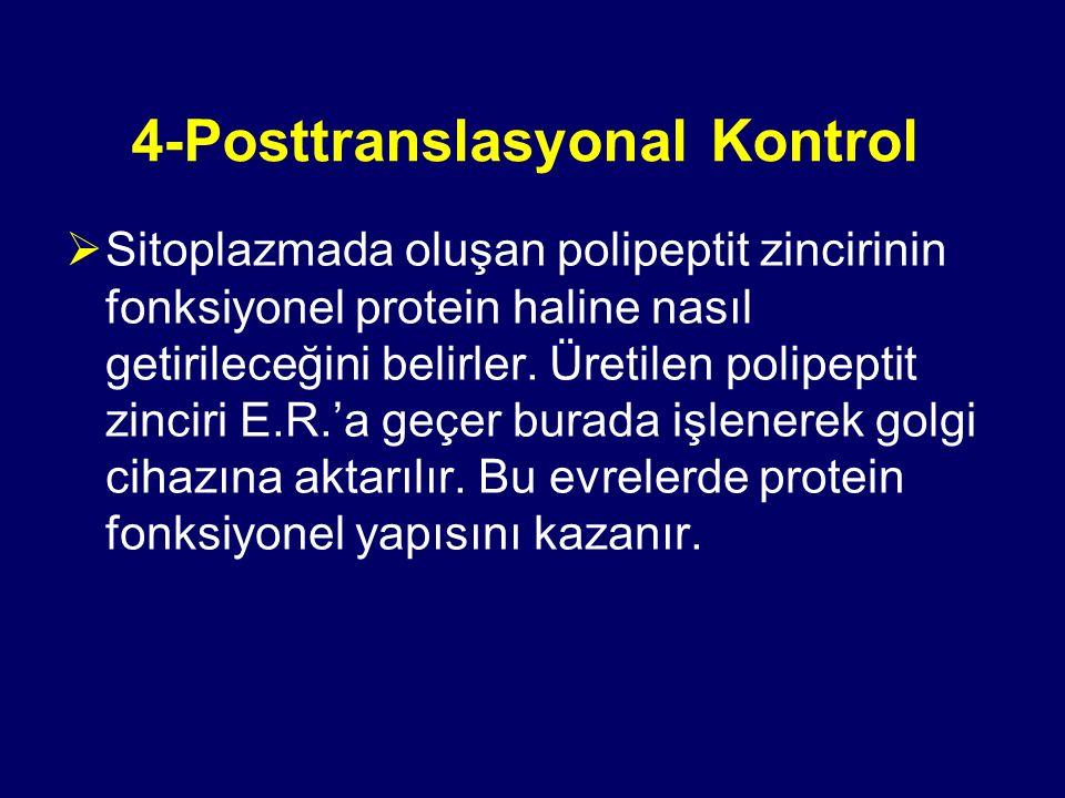 4-Posttranslasyonal Kontrol  Sitoplazmada oluşan polipeptit zincirinin fonksiyonel protein haline nasıl getirileceğini belirler. Üretilen polipeptit