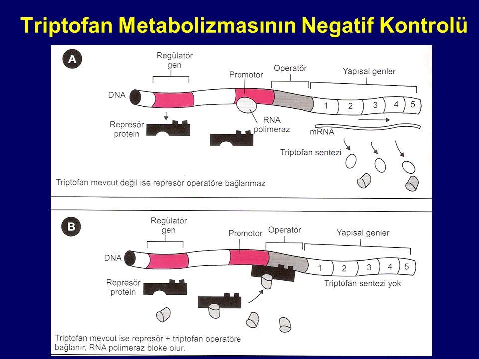 Triptofan Metabolizmasının Negatif Kontrolü