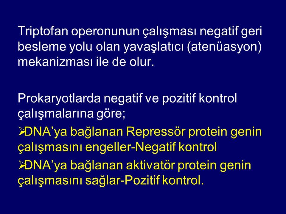 Triptofan operonunun çalışması negatif geri besleme yolu olan yavaşlatıcı (atenüasyon) mekanizması ile de olur. Prokaryotlarda negatif ve pozitif kont