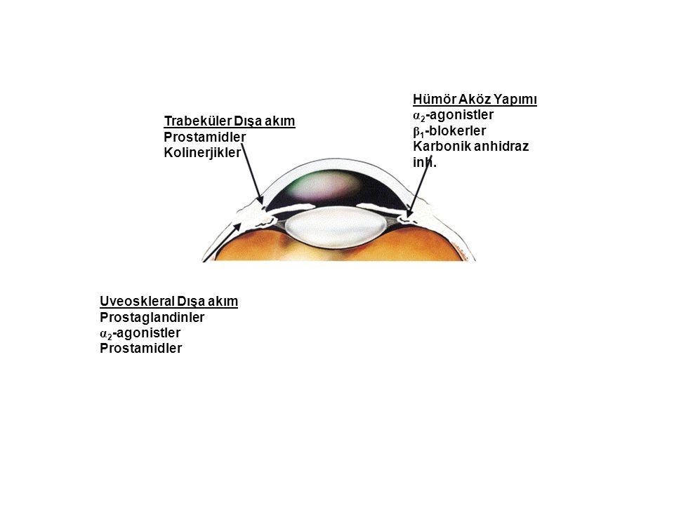Trabeküler Dışa akım Prostamidler Kolinerjikler Hümör Aköz Yapımı α 2 -agonistler β 1 -blokerler Karbonik anhidraz inh. Uveoskleral Dışa akım Prostagl