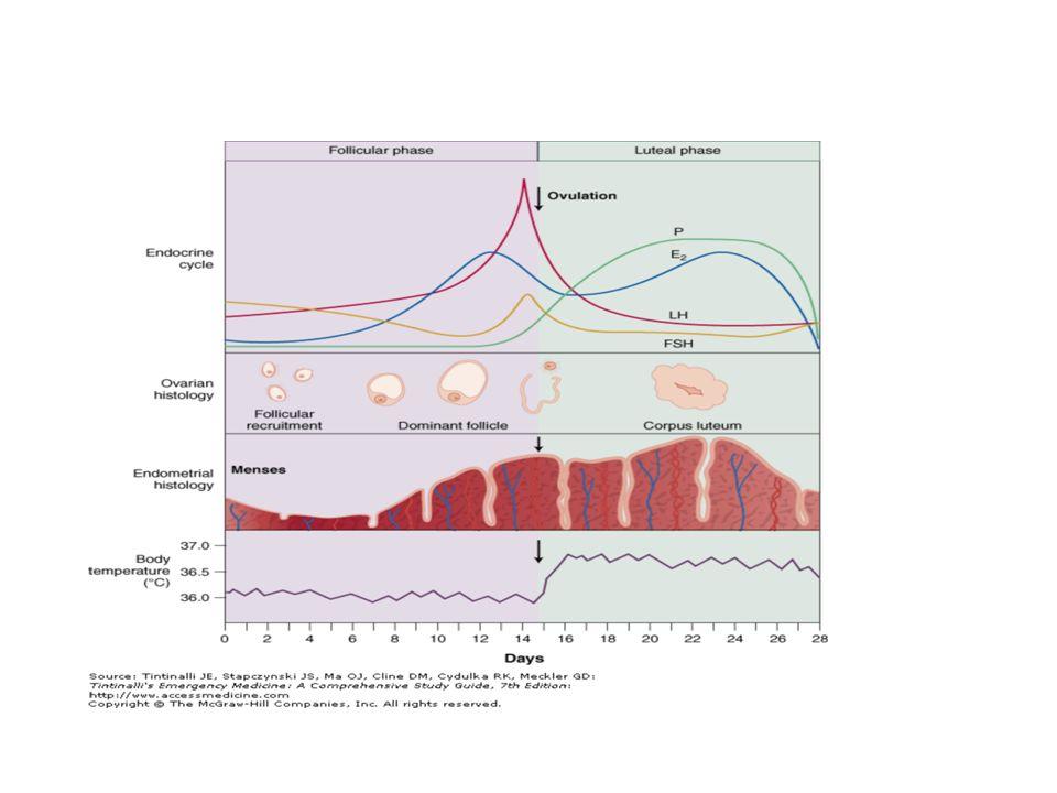 Sistemik hastalıklar: Primer koagulasyon bozuklukları %5-20 oranında adölesanlarda akut menorajiye neden olur (en sık vWH) Myeloproliferatif bozukluklar ve İTP Antikoagulan kullanımı Hipotiroidi (açıklanamayan kanamada TSH bakılmalıdır) Siroz