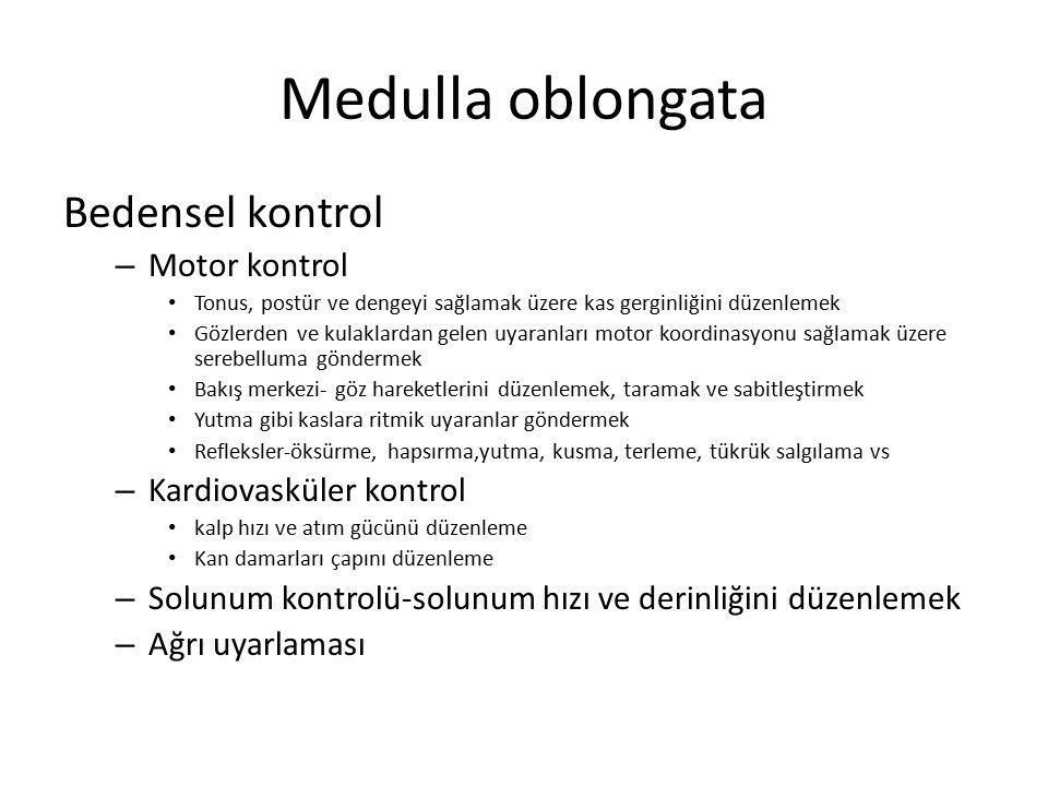 Medulla oblongata Bedensel kontrol – Motor kontrol Tonus, postür ve dengeyi sağlamak üzere kas gerginliğini düzenlemek Gözlerden ve kulaklardan gelen