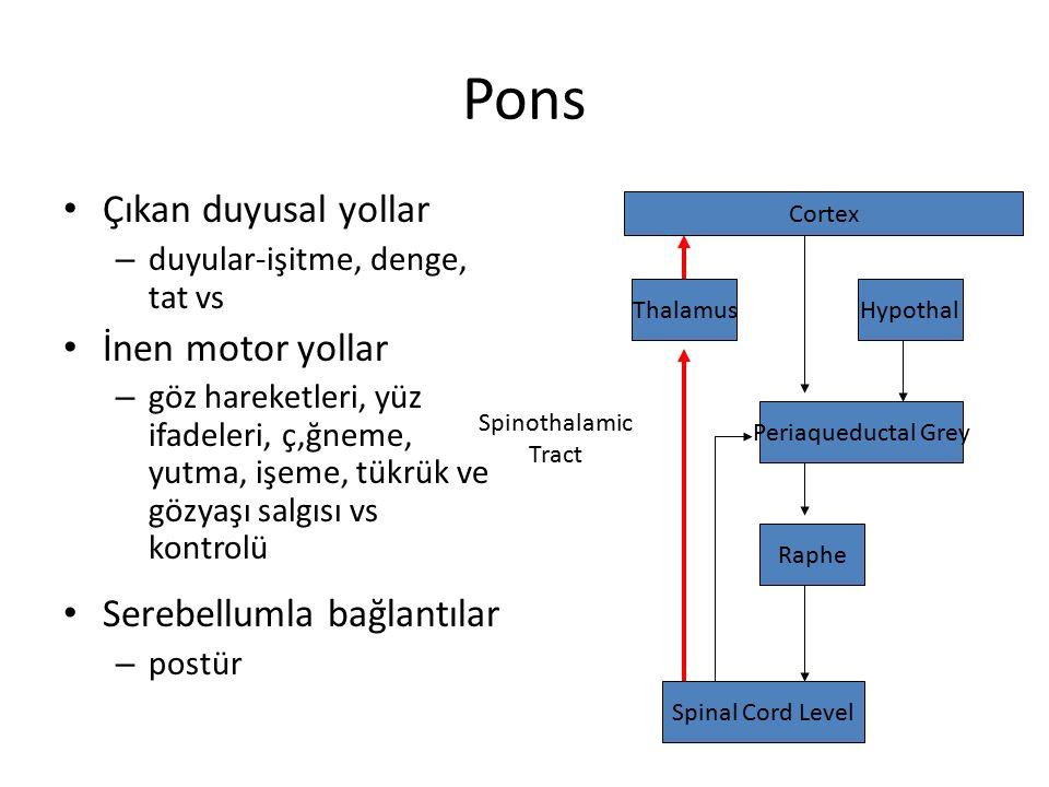 Pons Çıkan duyusal yollar – duyular-işitme, denge, tat vs İnen motor yollar – göz hareketleri, yüz ifadeleri, ç,ğneme, yutma, işeme, tükrük ve gözyaşı