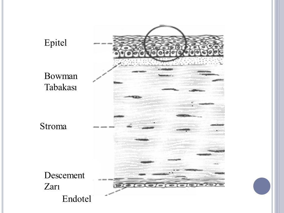 K ORNEA F IZYOLOJISI Epitel ve endotel: Sıvı geçişine karşı bariyer işlevi Metabolik pompa Yüksek metabolik aktivite Enerji: Aerobik ve anaerobik glikoliz Glukoz: Ön kamara sıvısı (% 90) Oksijen: Epitel: Gözyaşı ve tarsal konjontiva Endotel: Ön kamara sıvısı